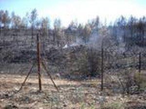 Forêt de pins détruite par un feu de forêt