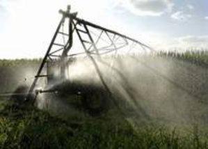 Un champ de maïs irrigué. A l'avenir, les besoins en irrigation pourraient augmenter